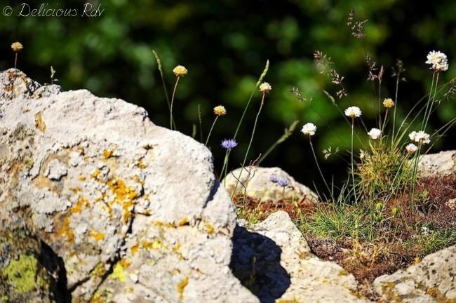 Fleurs-de-Montagne21