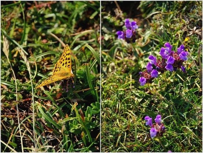 Papillon-Fleur1
